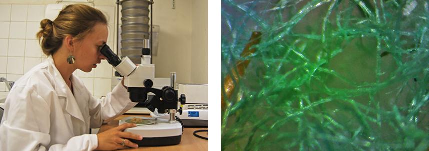 récherche de fibres biosourcées dans le laboratoire HYDROFIB
